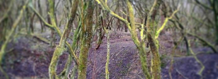 MossTrees