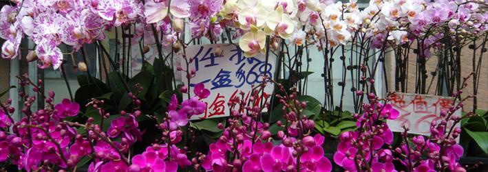 HK Orchids